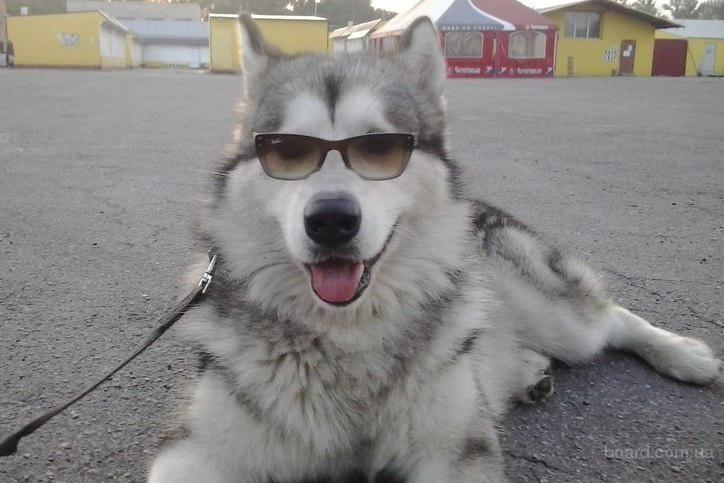 Дрессировка щенков и собак всех пород в Харькове и пригороде, услуги опытных кинологов