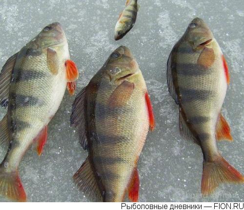 Рыбалка зимой с поплавочной удочкой.  Удочка для зимней рыбалки.