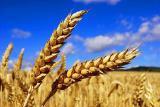 Семена бобовых, зерновых и кормовых культур