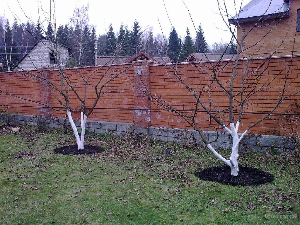 Обрезка плодовых весной Обрезка плодовых деревьев, обрезка старых яблонь, груш, слив, стрижка растений, кустарников...