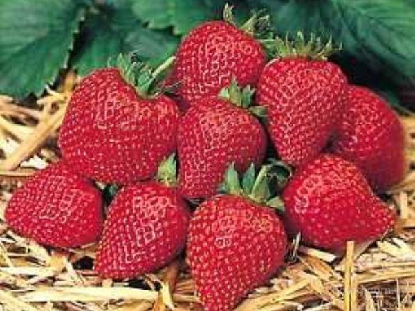 У нас вы можете b купить/b клубнику оптом, а также другие b ягоды/b по...