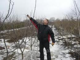 Каждую весну мы проводим формирующую обрезку плодовых и декоративных деревьев, для того, чтобы в ваши сады растенья...