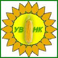 Насіння кукурудзи (посівний матеріал)