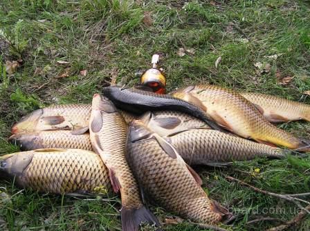 Продам живую рыбу, раков