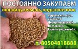 Мука пшеничная _ Борошно пш _ виробник