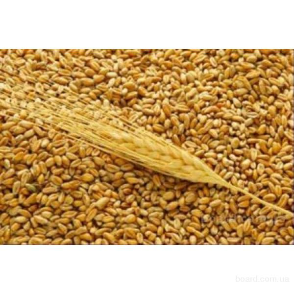 7 (777) 1989988.  Экспорт зерна, мобильный комбикормовый завод на шасси прицепа.  Экспорт пшеницы из Казахстана...
