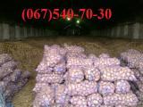 Продам картофель картошку картоплю оптом