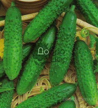 Семена овощей в магазине «ДоброДар»