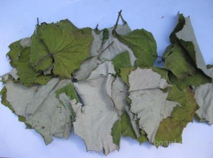 Продам лекарственные травы : мать и мачеха , спорыш, чистотел, липа.