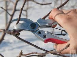 Обрезка деревьев весной * Обрезка деревьев в саду * Обрезка старых деревьев * Обрезка садовых деревьев * Обрезка...