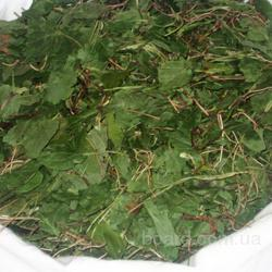 Боровая матка (ортилия однобокая) трава