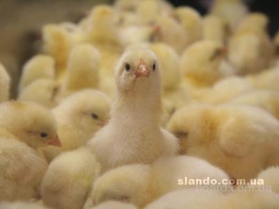 Продам сбалансированный полно рационный комбикорм для всех видов животных !!!!!!