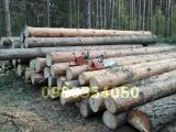 Продам лес кругляк(сосна,дуб,ольха) c доставкой в Киев и область.