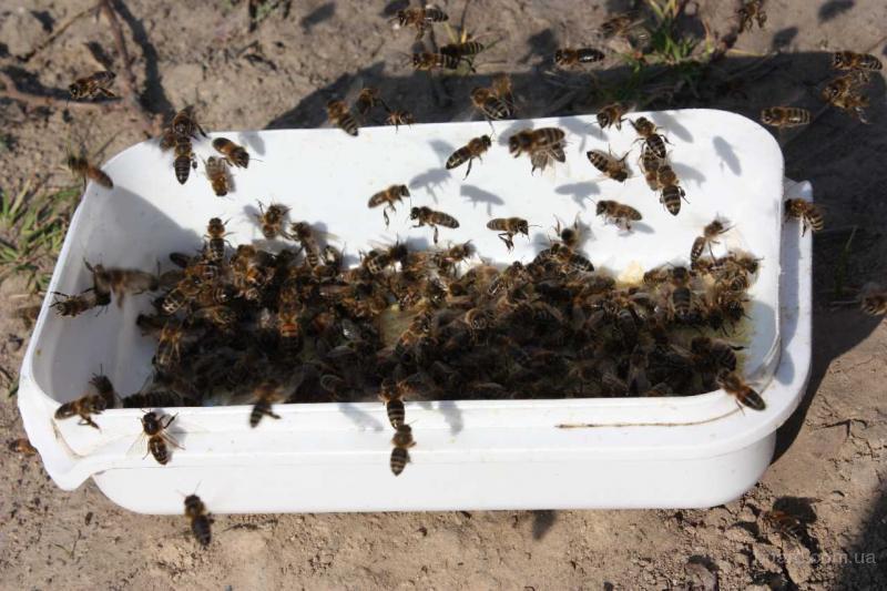 как приготовить прикормку для пчел
