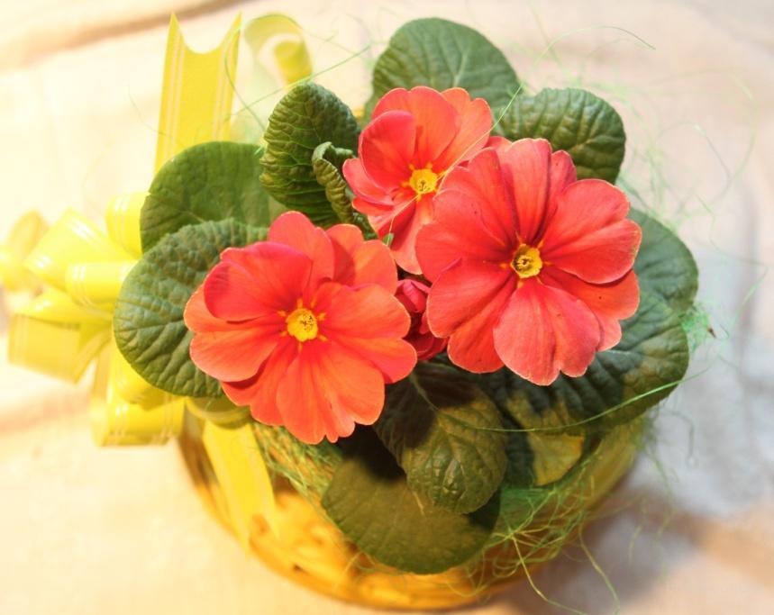 Цветы и растения на 8 марта! Красивые цветы! Цветы опт Киев!