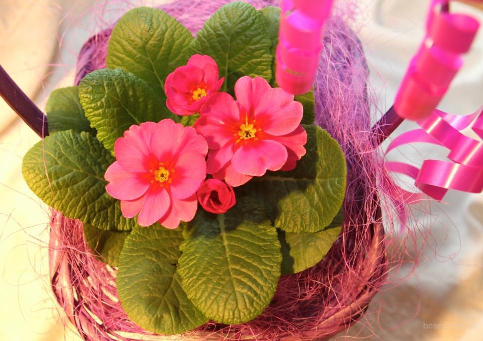 Подарки на 8 марта, весенние цветы, цветы магазин г.Киев