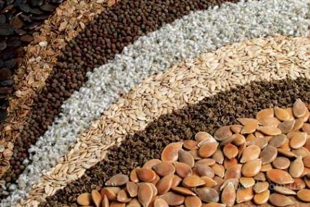 Семена посевматериал гороха ,горчицы,льна,ячменя ярового,просо.