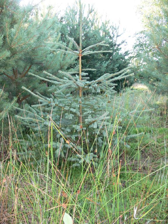Деревья растения лиственные хвойные