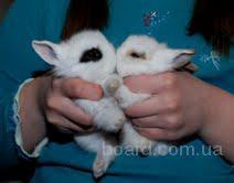 Кролик декоративный – приятная цена и море нежности
