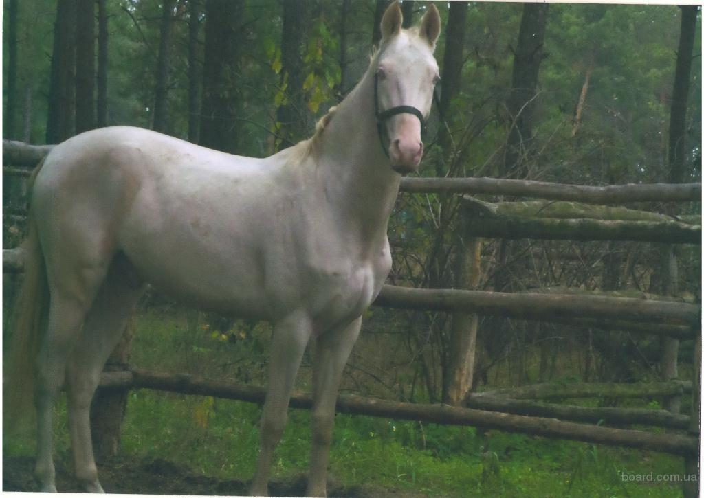 Продам породистых лошадей