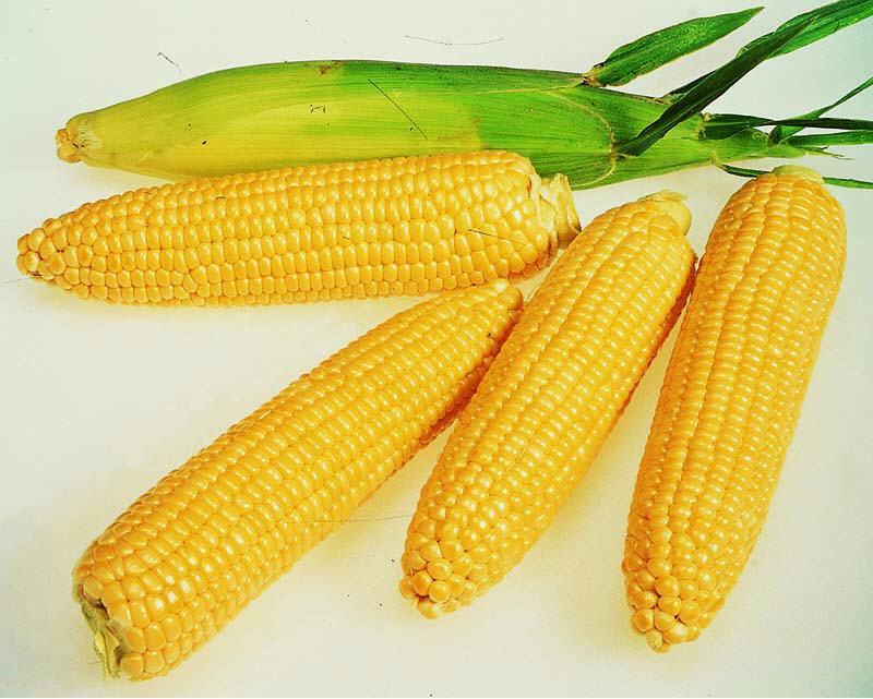 Семена кукурузы гибриды F-1,кукуруза.Недорого!