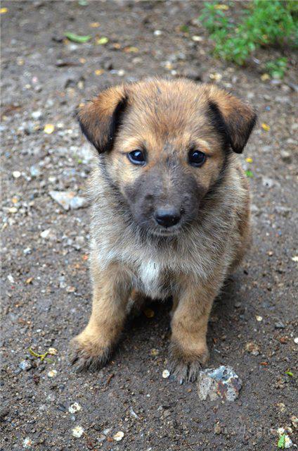 Подарю щенка в добрые руки