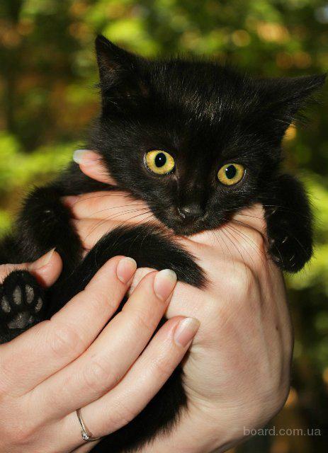 фото черных котят наилучшие
