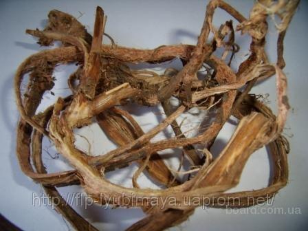 Красный корень (копеечник забытый)-лечение аденомы