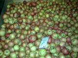 Купим яблоки на промпереработку,от 20 тонн,самовывоз,быстрый расчет,любой регион