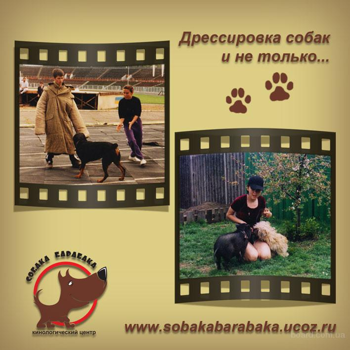 """Дрессировка КЦ"""" Собака Барабака""""Киев."""