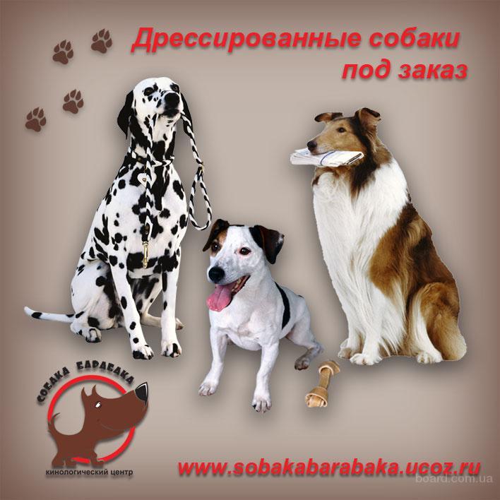 Продажа дрессированных,натасканых собак;свиней!Киев.