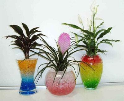 Цветы для фен шуя