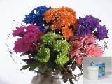 \краска для цветов хризантем