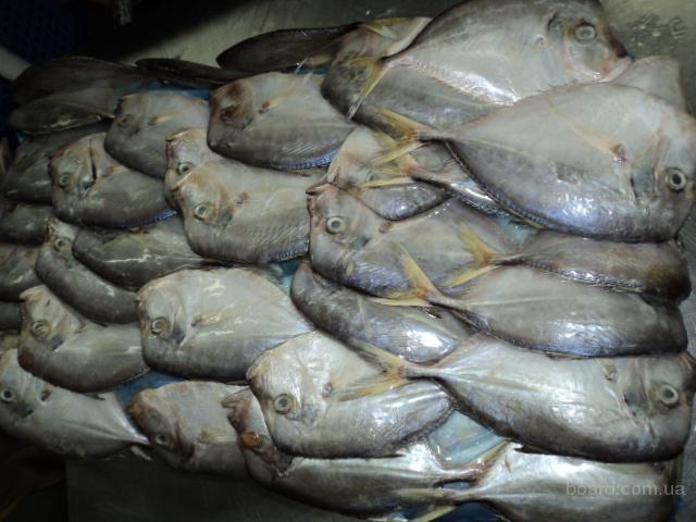 Замороженная рыба и морепродукты Опт