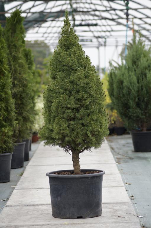 Декоративные растения продам