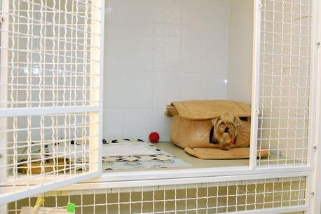 Отель для передержки животных в Киеве