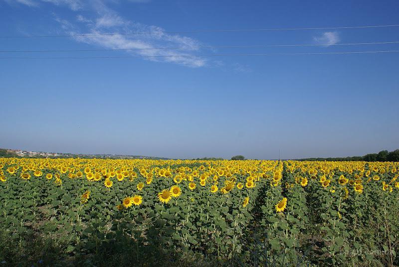 Продать землю пай украина